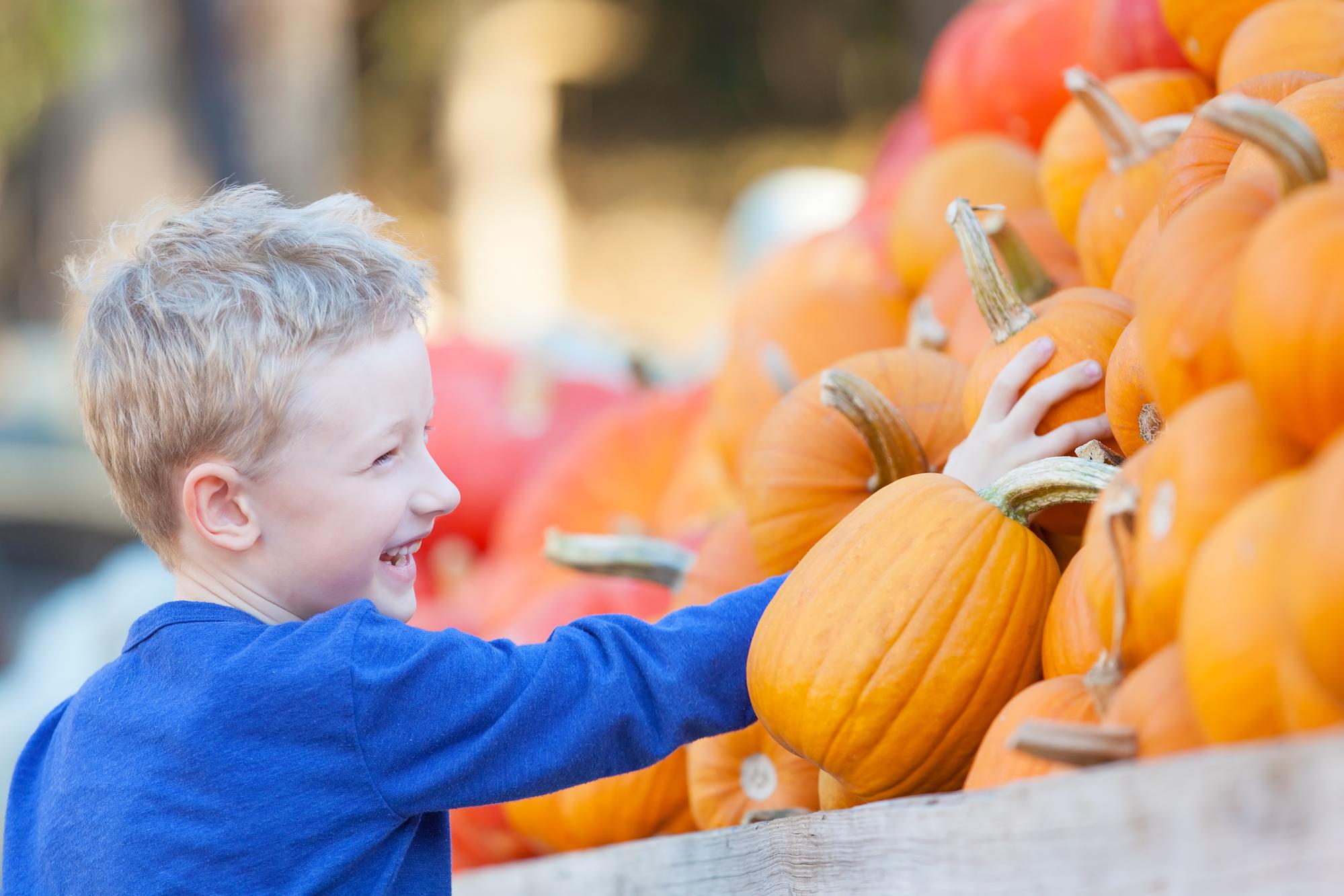 Kid At A Pumpkin Patch