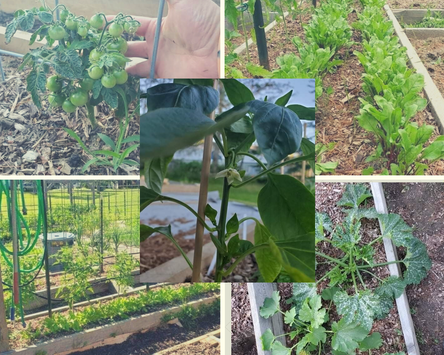 Your Garden Is Planted—Now What?